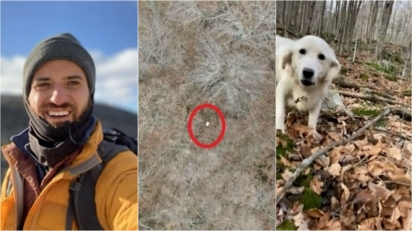Piloto de drone entra em ação para ajudar a localizar golden retriever que estava perdida há 10 dias em floresta. (Foto: Reprodução/ABC News)