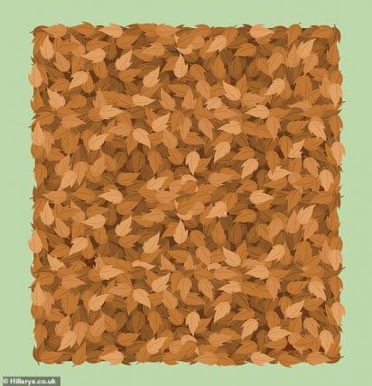 Neste, você precisa localizar seis ouriços furtivos escondidos entre as folhas. (Foto: Reprodução/Hillarys.co.uk)