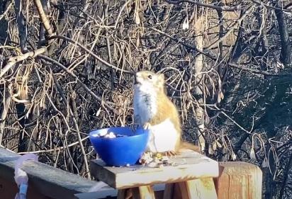 Kathleen Morlok registra o momento em que o esquilo ao comer a fruta fermentada fica fora de si. (Foto: Reprodução Youtube/Piggy Girl 2010)