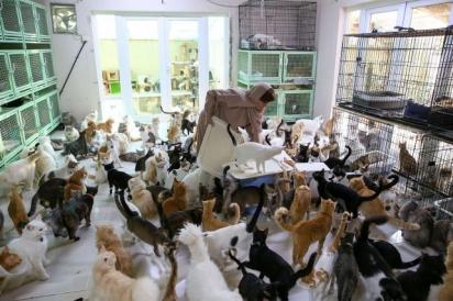 O amor pelos animais foi crescendo e atualmente ela têm 480 gatos e 12 cães. (Foto: AFP via Getty Images)