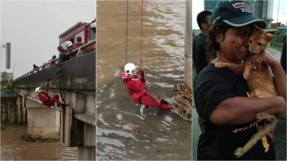 Bombeiros não mediram esforços para salvar vida de gatinho que caiu de ponte. (Foto: Facebook/Info Roadblock JPJ/POLIS)