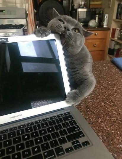 Você vai me dar atenção ou eu vou ter que quebrar tudo? (Foto: Reddit/Iamllamma)