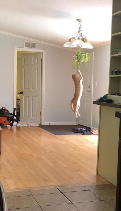 Novo objeto de decoração da casa! (Foto: Reddit/Funkofairy)