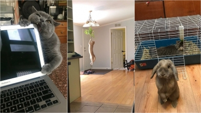 Gatos adoram aprontar e deixam a vida dos seus donos mais humorada. (Foto: Reddit/Iamllamma | Reddit/Funkofairy | Reprodução/Bored Panda)