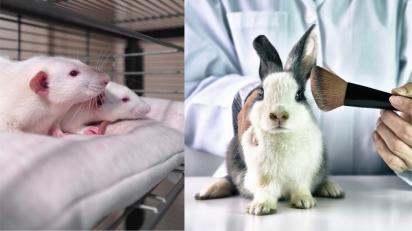 Distrito Federal aprova lei que prevê multa de R$ 1 milhão para empresas que testam cosméticos em animais. (Foto: Divulgação Unsplash/riccardo ragione | Divulgação/Pegasus Foundation)