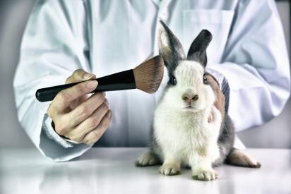 Porquinhos-da-índia, camundongos, coelhos e macacos são os animais mais utilizados pelos cientistas como cobaias. (Foto: Divulgação/Pegasus Foundation)