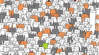 Encontre o coelho escondido no meio de gatinhos. (Foto: Reprodução/Dudolf.com)