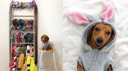 Dachshund tem um guarda-roupa de dar inveja. (Foto: Instagram/littledaisydachshund)