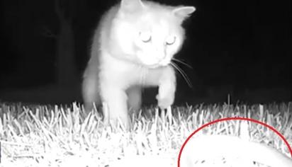 O gatinha invade o jardim do vizinho e encontra uma cobra no quintal. (Foto: Storyful/Olga Geurts)