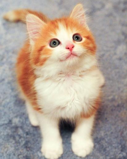 O gatinho foi diagnosticado com infecção viral, que apesar de limitar as suas patas, não o impediu de recuperar a movimentação. (Foto: Instagram/thekittencarer)