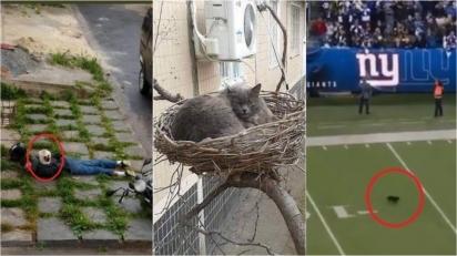 Conta no Twitter publica imagens hilárias de gatos em lugares improváveis. (Foto: Twitter/@catsnoplace)
