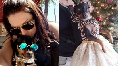 Mulher trata chihuahua resgatada como uma verdadeira princesa. (Foto: Reprodução/Caters News Agency)