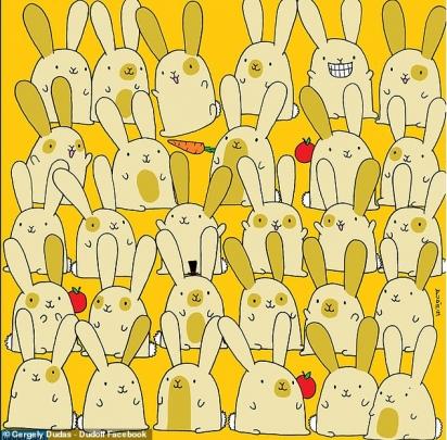 Desafio: há 29 coelhos sentados em cinco fileiras, sendo que, 14 coelhos possuem irmãos gêmeos enquanto 1 é solitário. Você consegue encontrá-lo? (Foto: Facebook/Dudolf)