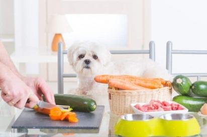 O animal de estimação se beneficiará com a alimentação natural balanceada, porém ela deve ser prescrita por um médico veterinário nutrólogo. (Foto: Divulgação/Pup Life Today)