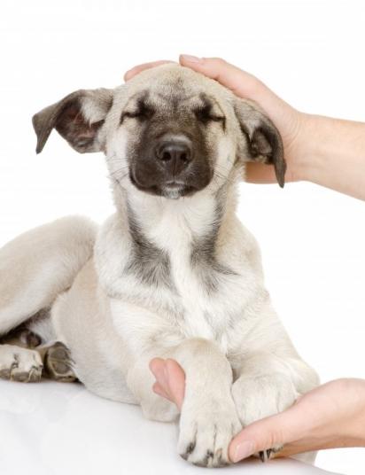 Muitos dos problemas dos pets podem ser ocasionados pela absorção da energia familiar. Cuide da espiritualidade do seu bichinho de estimação e principalmente da sua. (Foto: Divulgação/Melhor Aumigo)