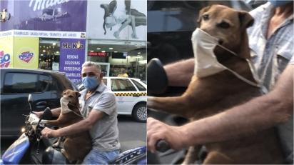 Cachorrinho é flagrado passeando com dono usando máscara facial e imagem viraliza. (Foto: Reprodução Twitter/@gianniscalora7)