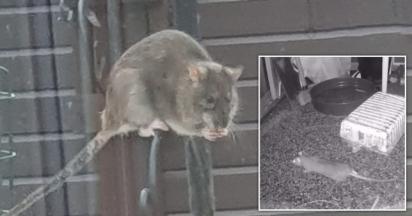 Câmeras capturaram a ação dos ratos no complexo de apartamentos. (Foto: Reprodução/ Men Media)