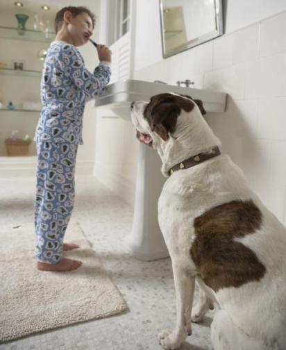 O cão não tem se sentido seguro e tem feito de você a zona de conforto. (Foto: Getty Images/ Chris Amaral)