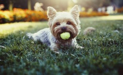 O descanso é umas das bases do bem-estar animal. (Foto: iStockPhoto/Yevgenromanenro)