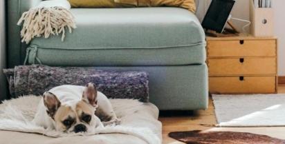 É necessário ensinar seu cão a ficar sozinho. (Getty)