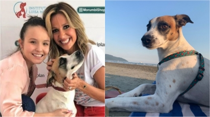 Luisa Mell desabafa sobre polêmica envolvendo cão vira-lata de Larissa Manoela; atriz rebate críticas. (Foto: Instagram/luisamell | Instagram/dogsdalarimanoela)