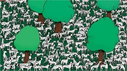 Dálmata sem pintas está infiltrado em meio de dezenas cães; descubra onde. (Foto: Reprodução/ Daily Mail)