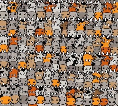 Desafio: encontrar o cachorro em meio as vacas. (Foto: Playbuzz)