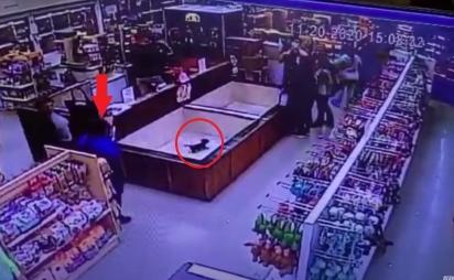Homem se aproxima do cercado do filhote de basset hound para roubá-lo. (Foto: Reprodução/Berks Weekly)