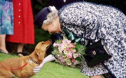 A rainha foi fotografada cumprimentando um corgi durante uma visita a Northumberland em 2019. (Foto: Reprodução/PA)