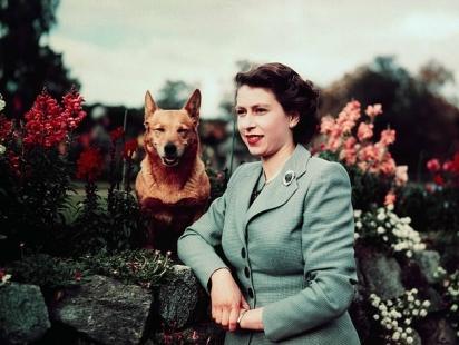 A rainha sempre foi apaixonada por cães. (Foto: Reprodução/Bettmann Archive)