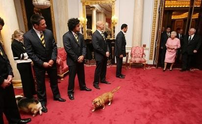 A rainha traz seus cães para encontrar jogadores e oficiais da equipe da New Zealand Rugby League, os All Golds, dentro do Bow Room no Palácio de Buckingham em 16 de outubro de 2007. (Foto: Tim Graham Photo Library)