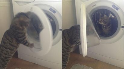 Ao ver a gata Kimber dentro da máquina de lavar, o gato César rapidamente fecha a porta do eletrodoméstico. (Foto: Kennedy News and Media)