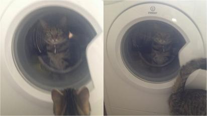 César fica olhando a Kimber pela porta e depois sai deixando a gatinha para trás.(Foto: Kennedy News and Media)