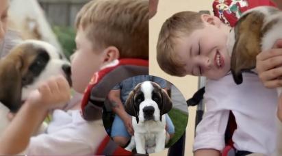 A família adotou o cachorrinho São Bernardo de oito semanas, Woody (na foto) para seu filho não-verbal Dexter, para ajudá-lo a se tornar mais independente. (Foto: BBC)
