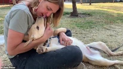 O filhote apavorado agora foi resgatado por Marcela Goldberg, 54, (na foto), que administra um abrigo para animais de estimação chamado Mascotas Coyoacán