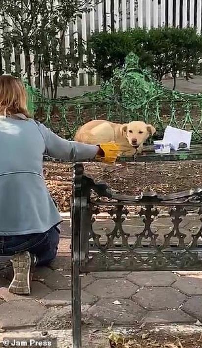 A princípio, o cão tentou morder as pessoas que vinham em seu socorro devido ao medo que sentia dos humanos