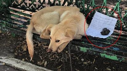 Boston, uma mistura de golden retriever de sete anos, foi encontrado em 22 de novembro no México ao lado de um bilhete que implorava que alguém o adotasse