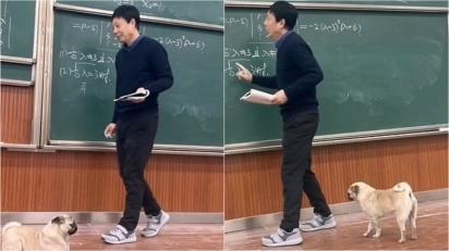 O pug estava atencioso assistindo a aula de álgebra. (Foto: Weibo/ Chongqing University)