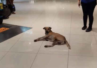 O cachorro de rua foi encontrado deitado no saguão do shopping e gentilmente foi retirado dali. (Foto: Facebook/ONE CAVITE)