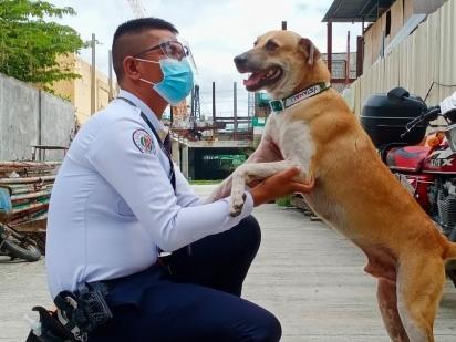 O cachorro fez amizade com o segurança e acabou sendo recrutado com outros 9 cães de rua para fazerem parte da segurança do shopping. (Foto: Facebook/DZMM TeleRadyo)