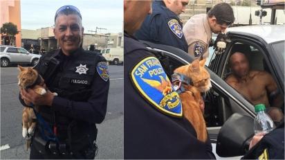 Homem suspeito de roubar carro ameaça se suicidar, mas se entrega à polícia quando vê o seu gatinho de estimação. (Foto: CHP San Francisco)
