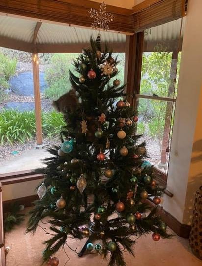 Coala entra em casa de família e sobe na árvore de natal. (Foto: Instagram/Mcqueen1004)