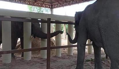 Kaavan (à esquerda) ficou conhecido como o elefante mais solitário do mundo. (Foto: Getty Images/Four Paws AFP)