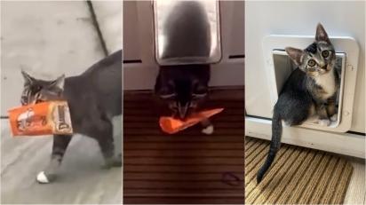 Família fica perplexa ao encontrar seu gatinho chegando em casa com saco cheio de guloseimas. (Foto: @sonnythesmilingcat/Kennedy News)