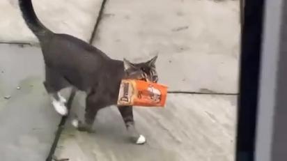 O gatinho chega em casa com guloseimas que pegou na vizinhança. (Foto: @sonnythesmilingcat/Kennedy News)