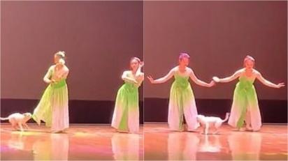 Cachorrinho vira-lata invade palco e começa a dançar com bailarinas em universidade na China. (Foto: Douyin/C19991115)