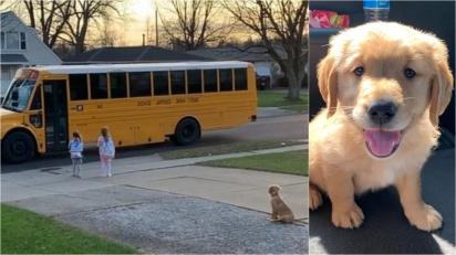Filhote de golden retriever se certifica de colocar suas crianças no ônibus escolar e só sai depois que elas embarcam. (Foto: Facebook Melissa Nixon para Golden Retriever Club)