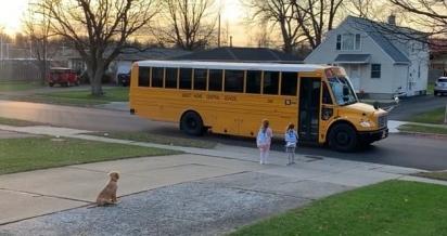 O pequeno golden retriever senta-se em frente a garagem para se certificar de que as meninas entrarão no ônibus. (Foto: Facebook Melissa Nixon para Golden Retriever Club)