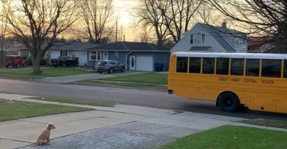 O pequeno dourado só se move da calçada quando o ônibus parte levando as meninas. (Foto: Facebook Melissa Nixon para Golden Retriever Club)