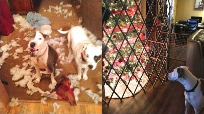 Cansada de ter suas árvores de natal destruídas pelos seus cães, dona compra cerca de aço para protegê-la. (Foto: Facebook/ Brenda Hofstad Hughes para Pet Shaming)